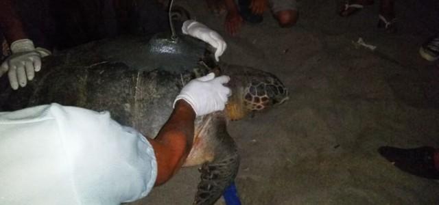 Il paradiso delle tartarughe a Camerota